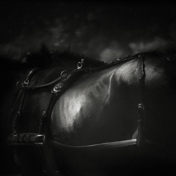 Monica Stevenson Equine Photography - bronzed