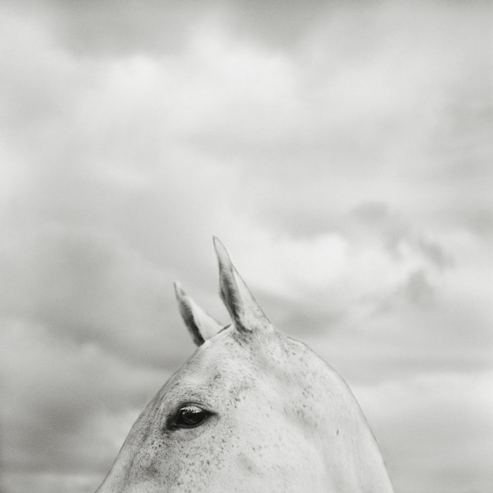 Monica Stevenson Equine Photography - Grey Horse Head and Clouds