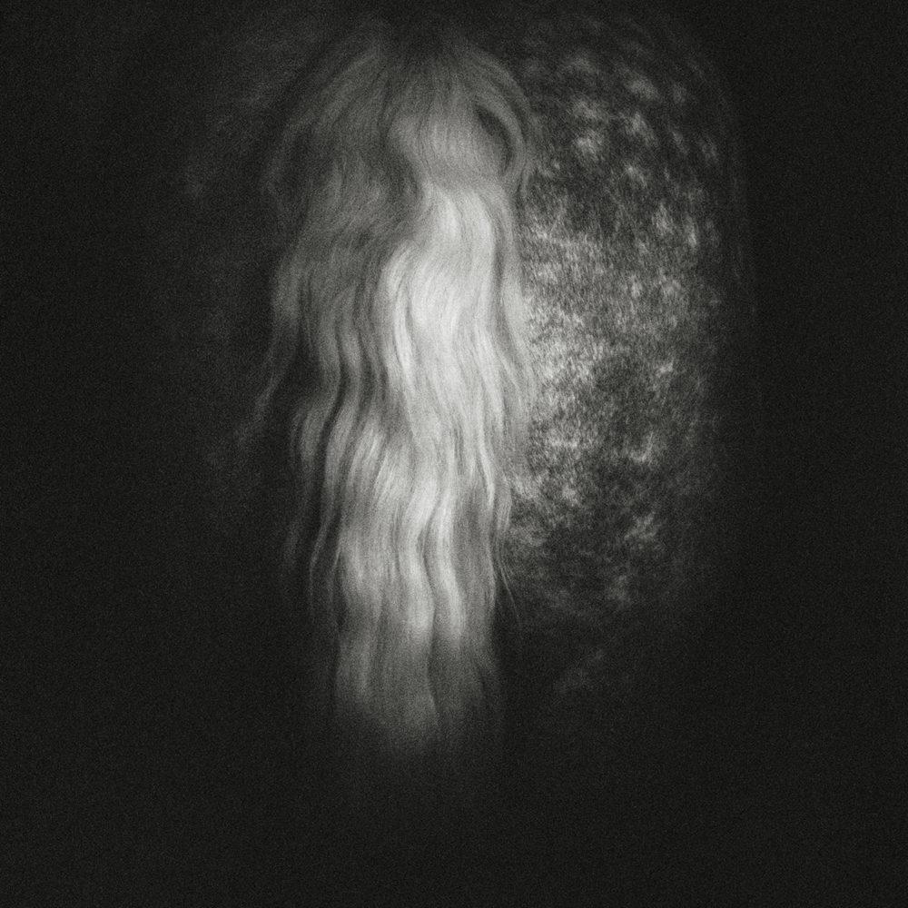 Monica Stevenson Equine Photography - horse tail