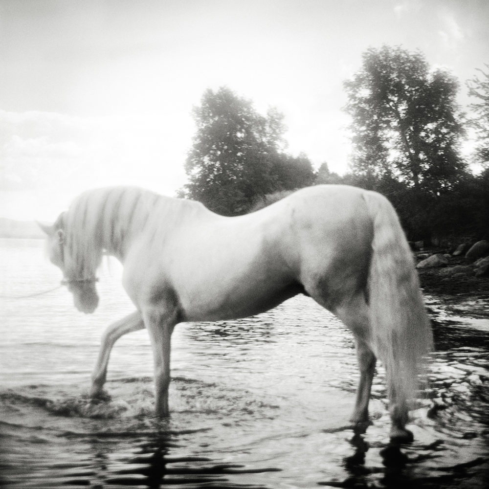 Monica Stevenson Equine Photography - Grey Horse in Lake Champlain