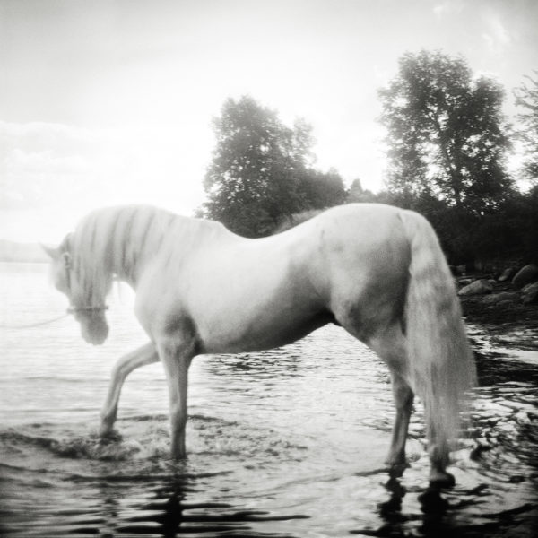 Monica Stevenson Equine Photography - Grey Horse in Lake Champlain
