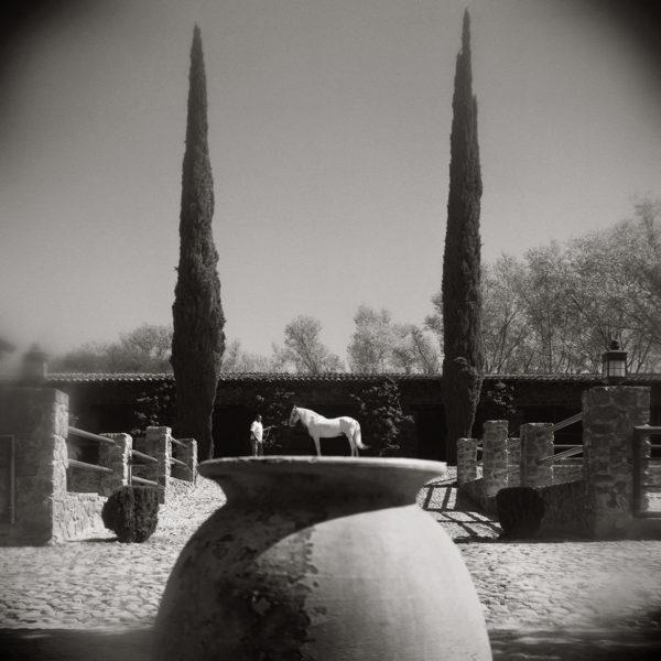 Monica Stevenson Equine Photography landscapes
