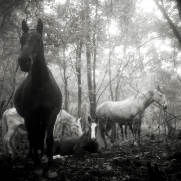 Monica Stevenson Equine Photography Spanish Influence and Landscapes
