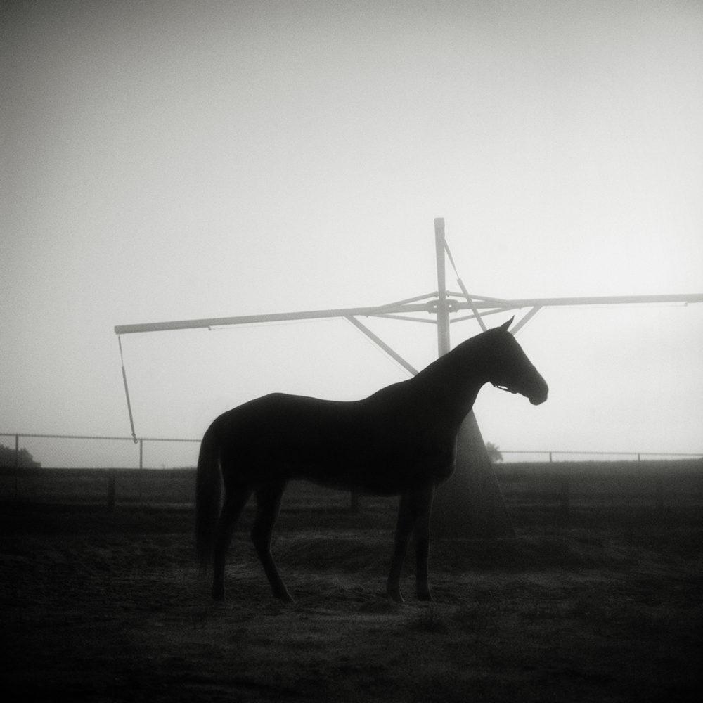 Monica Stevenson fine art photography - horse on hotwalker