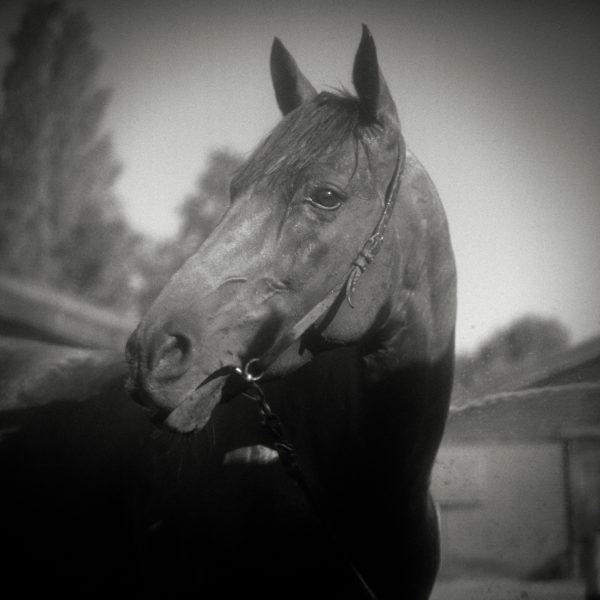 Horse Heads Monica Stevenson