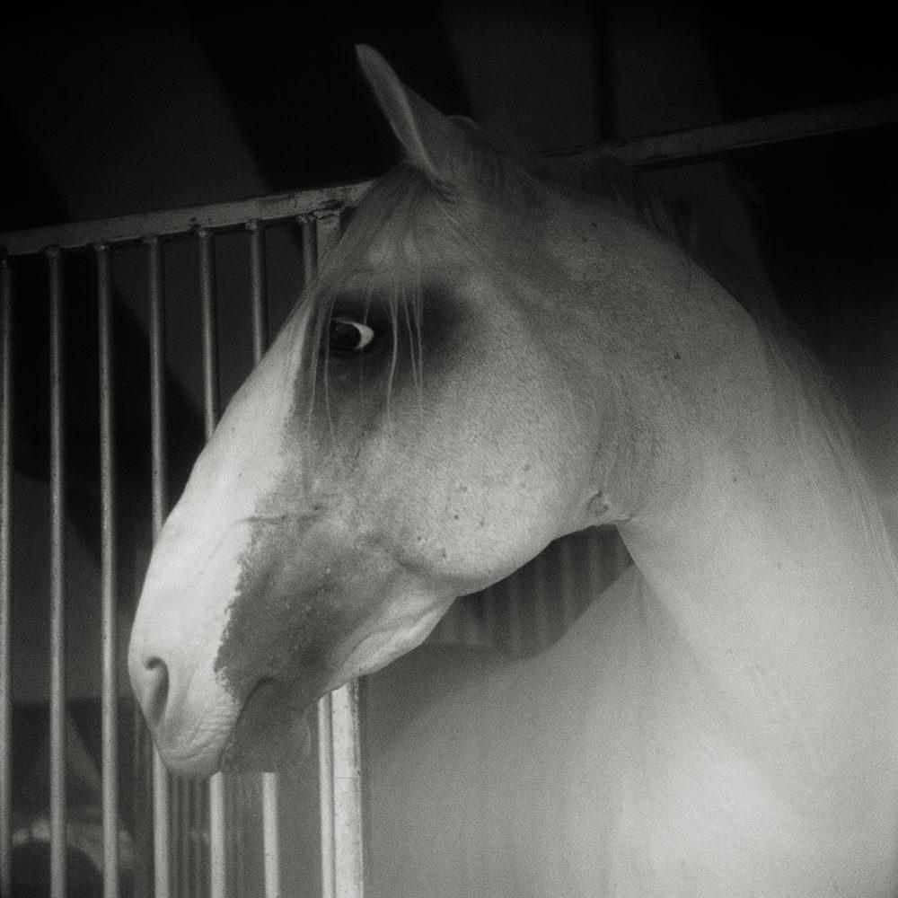 Horse Heads Collection - Monica Stevenson