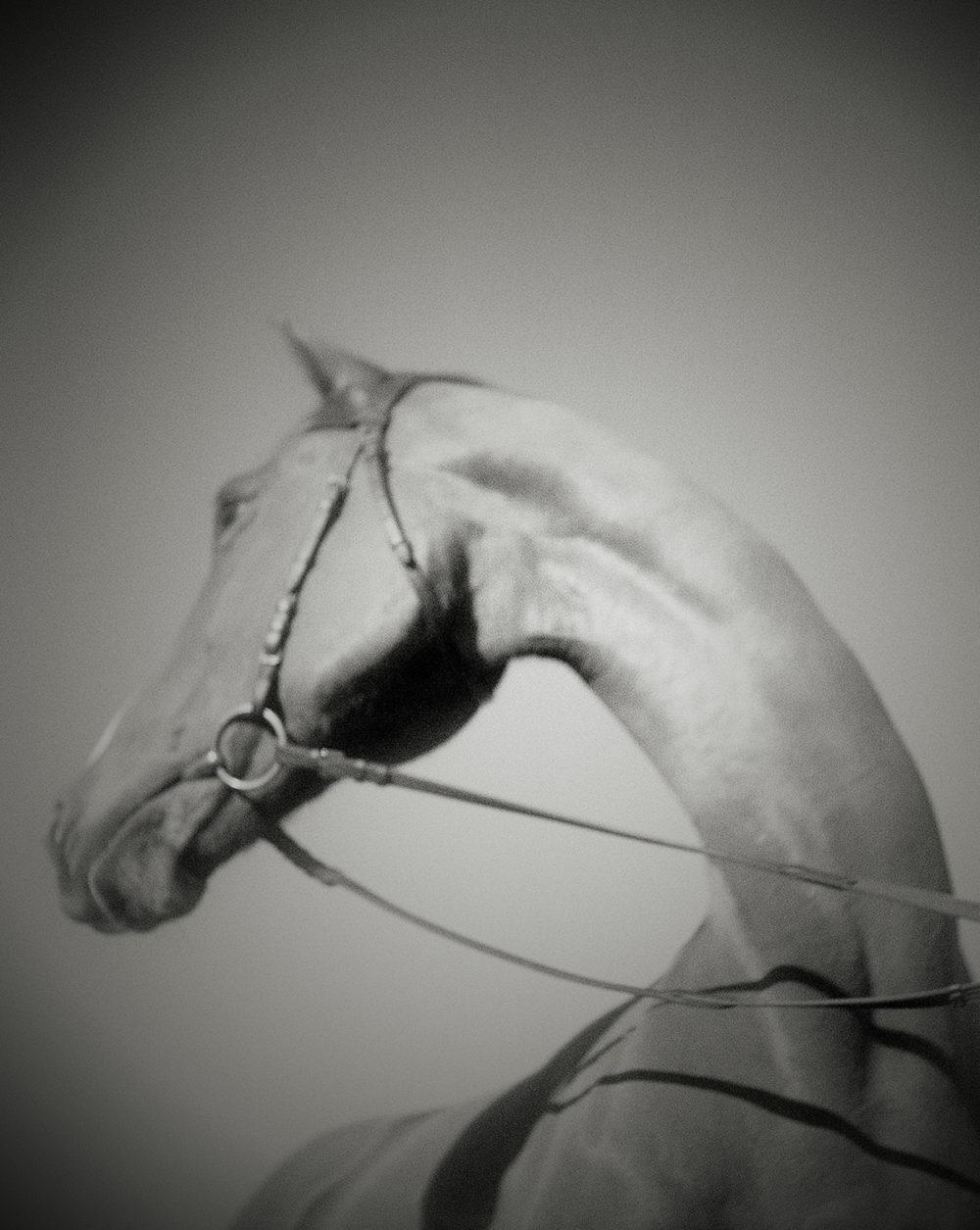 horse heads like a swan