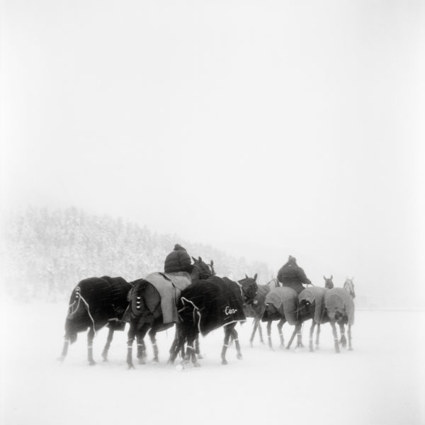 Monica Stevenson Equine Photography - polo ponies in snowy field