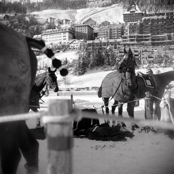Monica Stevenson polo collection - polo ponies in St. Moritz