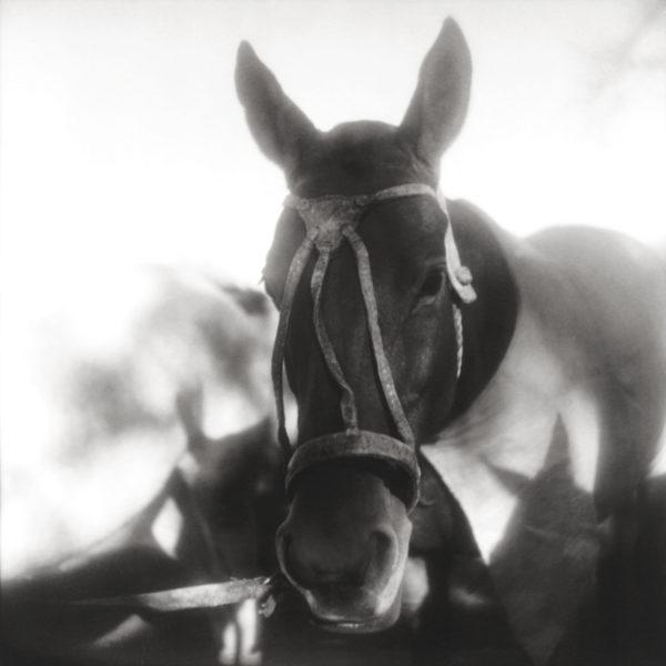 Monica Stevenson horse in rawhide halter