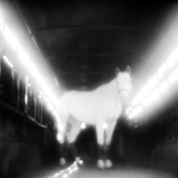 Monica Stevenson Equine Photography Phantasms Collection