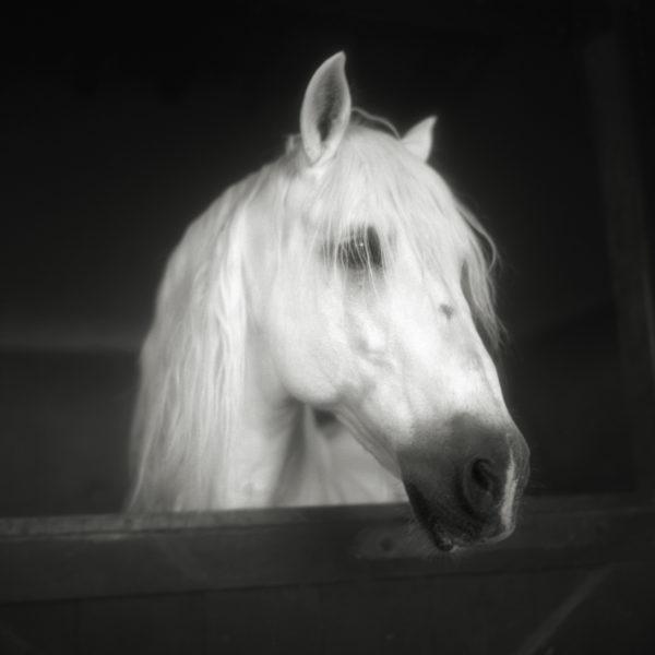 Monica Stevenson Equine Photography Horse Head