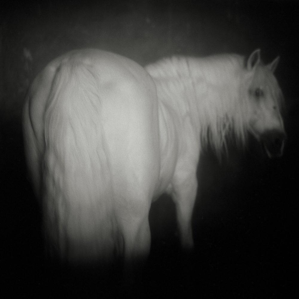 Monica Stevenson Equine Photography Baroque Dream