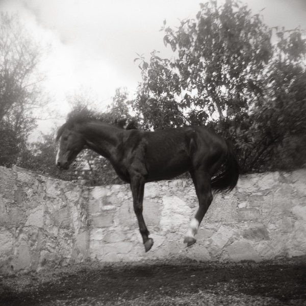 Monica Stevenson Spanish Influence Collection - young horse jumping