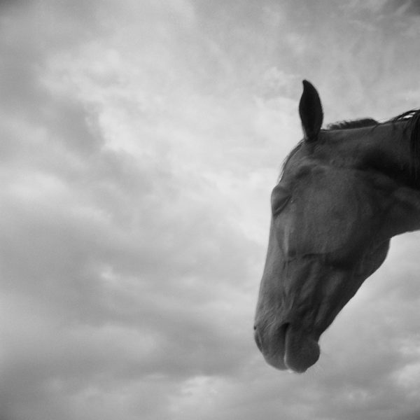 Monica Stevenson Equine Photography - Horse Head and clouds