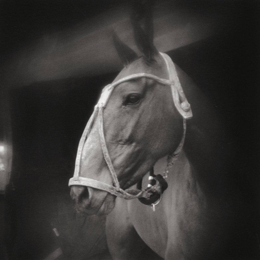 Monica Stevenson Polo and Spanish Influence - polo pony