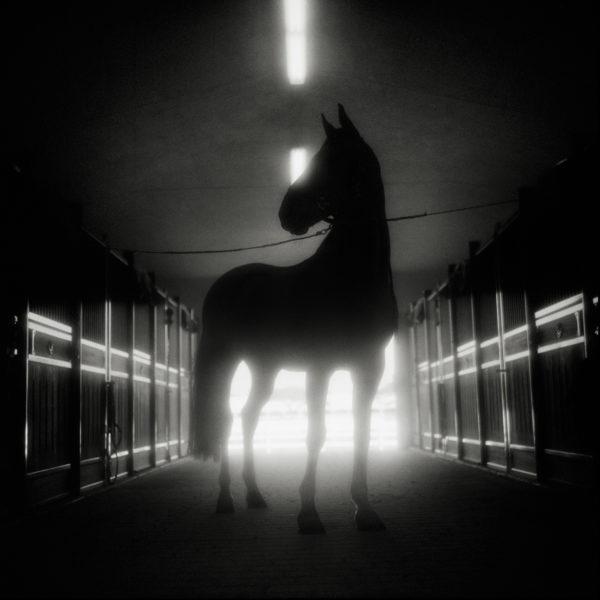 Monica Stevenson Equine photography - horse silhouette