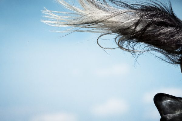 Monica Stevenson-HORSEscapes Show-Aerial C