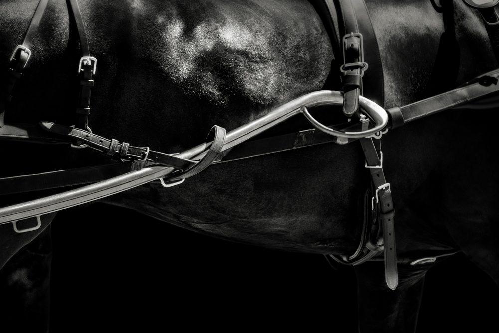 Monica Stevenson-HORSEscapes-Bound and Unbound