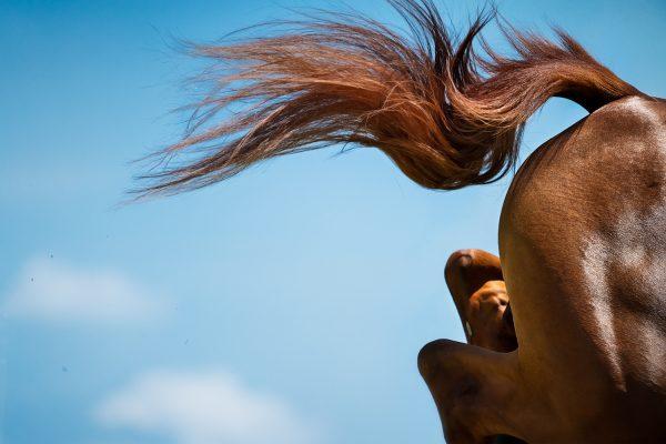Monica Stevenson-HORSEscapes Show-icarus