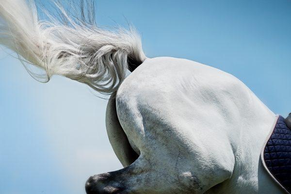 Monica Stevenson-HORSEscapes Show-Pegasus B