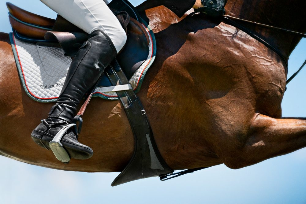 Monica Stevenson-HORSEscapes Show-Pterippi B