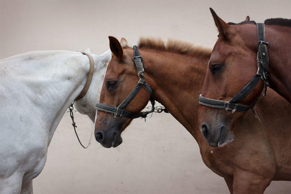 Monica Stevenson Horse Heads