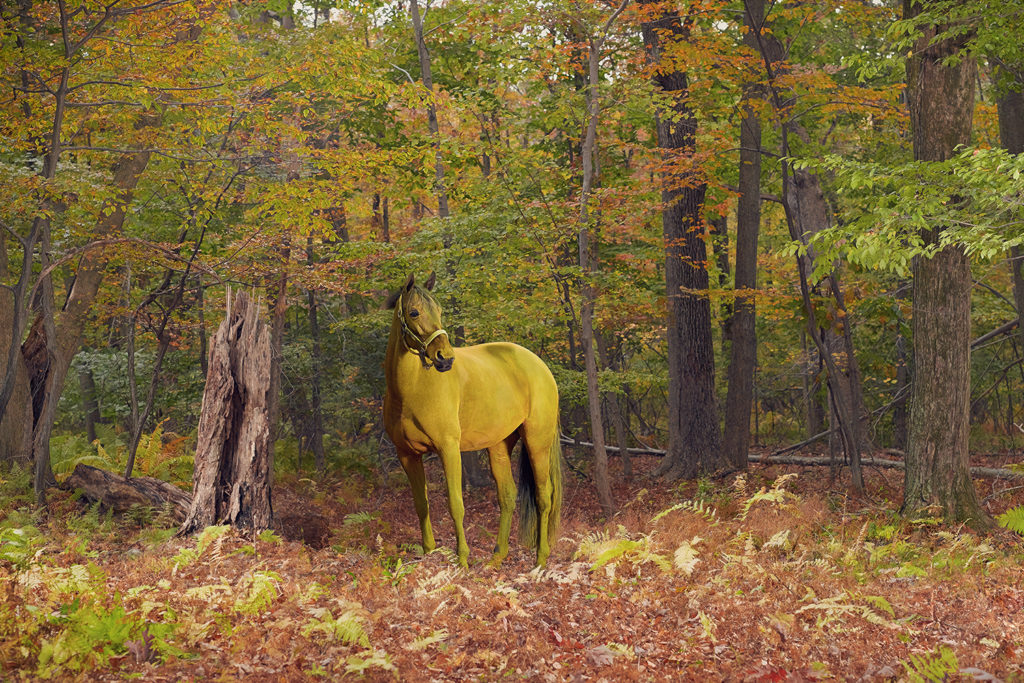 Monica Stevenson Equine Photography - Zoe Collection Horse in Autumn Woods